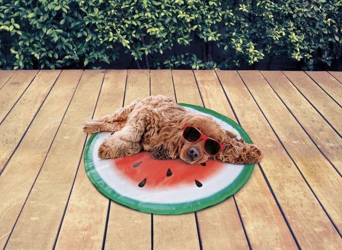 tappetino refrigerante cani